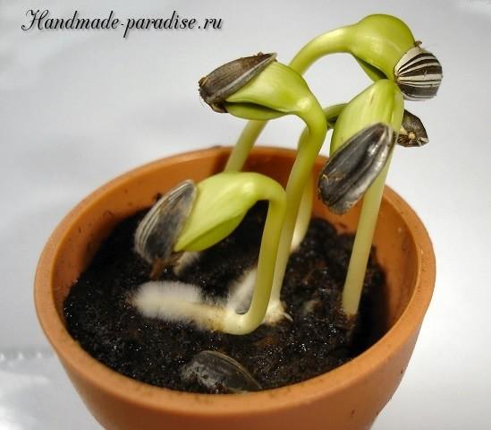 Проростки - альтернатива свежей зелени (2)