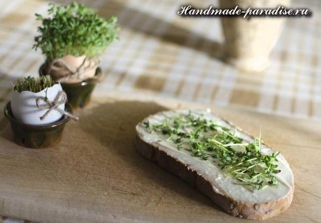 Проростки - альтернатива свежей зелени