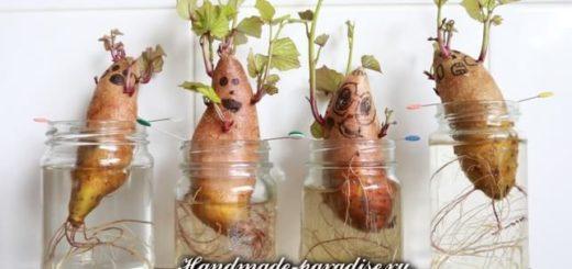 От воспаления суставов - проросшая картошка
