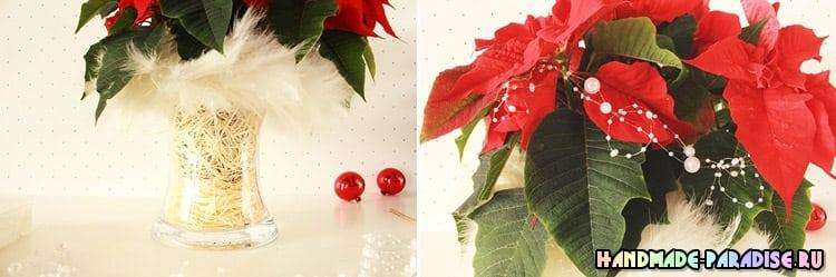 Пуансеттия – оригинальный подарок для новогодних праздников (2)