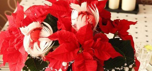 Пуансеттия – оригинальный подарок для новогодних праздников