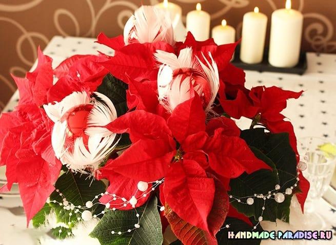 Пуансеттия – оригинальный подарок для новогодних праздников (5)