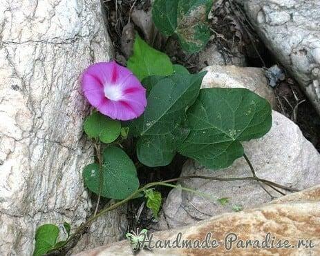 Ипомея - цветок утренней зари из капрона (5)