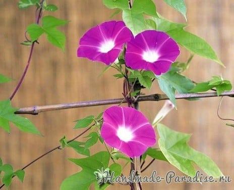 Ипомея - цветок утренней зари из капрона (8)