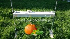 Какие фитолампы лучше всего подходят для выращивания рассады (2)