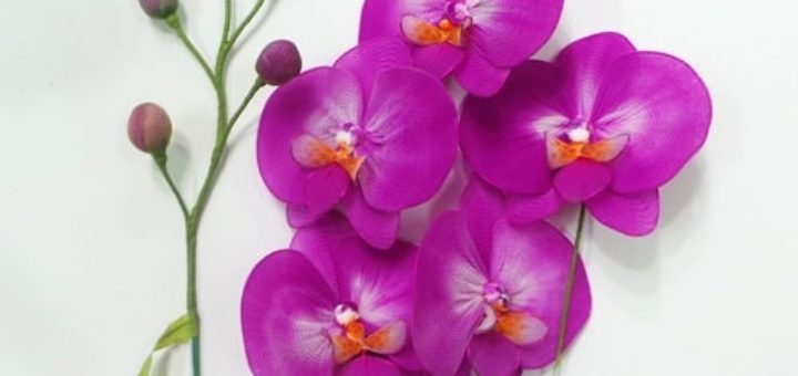 Орхидея Фаленопсис из капрона. Мастер-класс