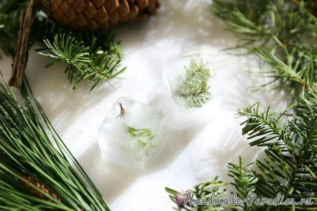 Кубики льда с сосновыми веточками