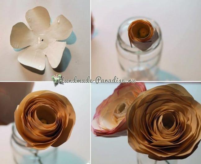Ранункулюс - садовый лютик из бумаги (2)