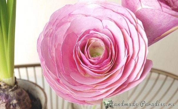 Ранункулюс - садовый лютик из бумаги (5)