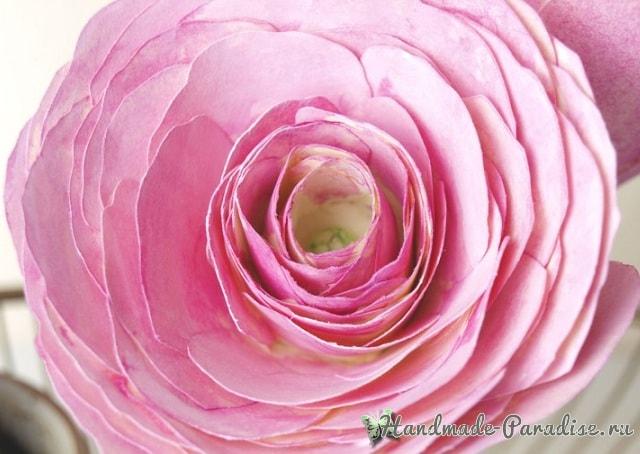 Ранункулюс - садовый лютик из бумаги (6)