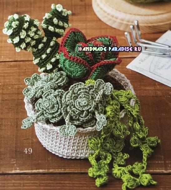 kaktusyi-i-sukkulentyi-kryuchkom-shemyi-3