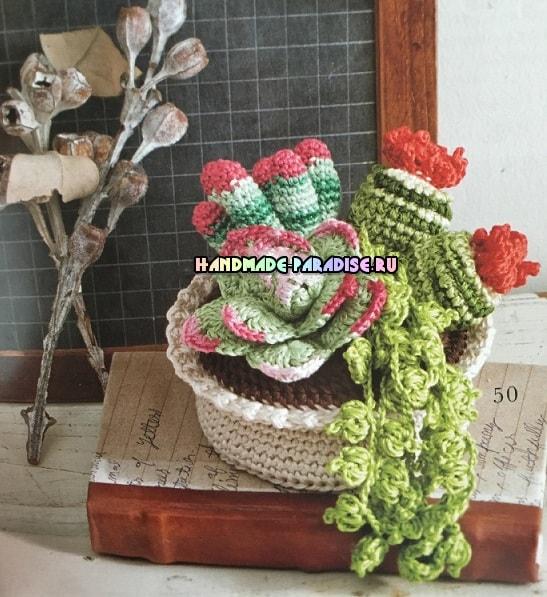 kaktusyi-i-sukkulentyi-kryuchkom-shemyi-4