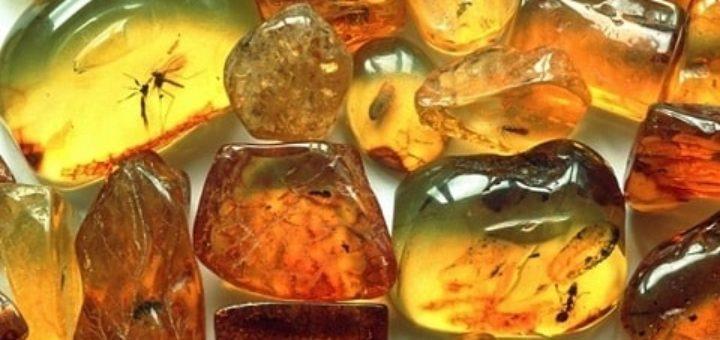Интересные нюансы о янтаре (1)