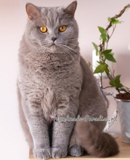 Любителям кошек. Рецепт песочного печенья (4)