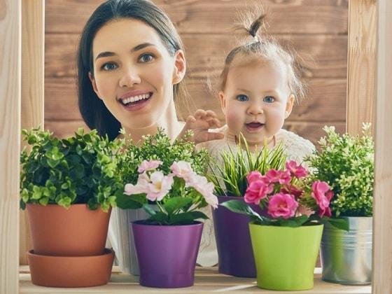 Опасные для детей комнатные растения (1)