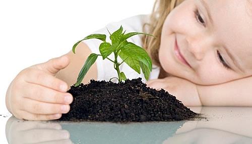 Опасные для детей комнатные растения (2)