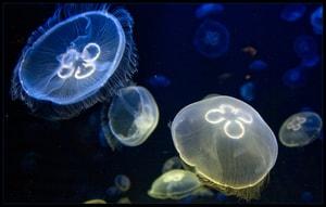 Беспозвоночные морские животные - морской огурец, улитка ахатина, гидроид медуза (3)