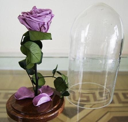 Живая и бессмертная роза (2)