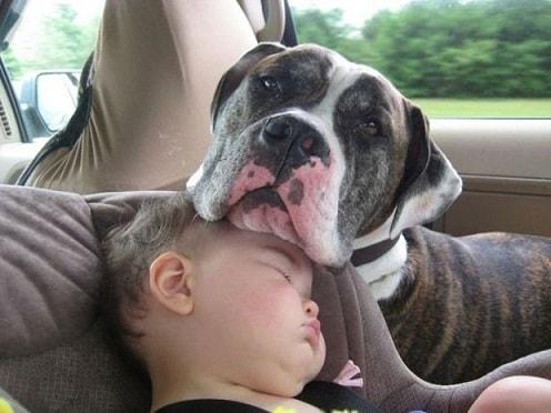 Собака как домашний питомец (1)
