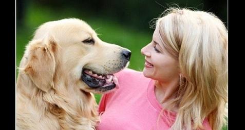 Собака как домашний питомец (4)