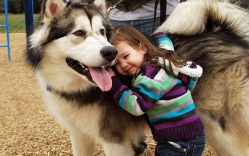 Собака как домашний питомец (5)