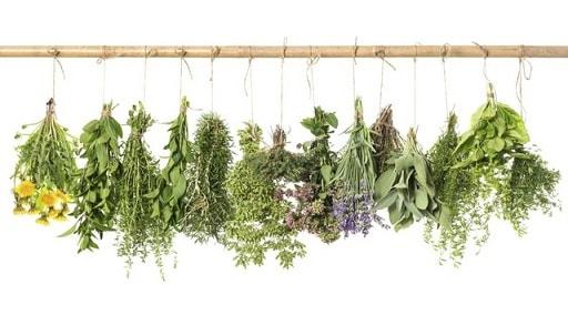 Растительные экстракты (1)