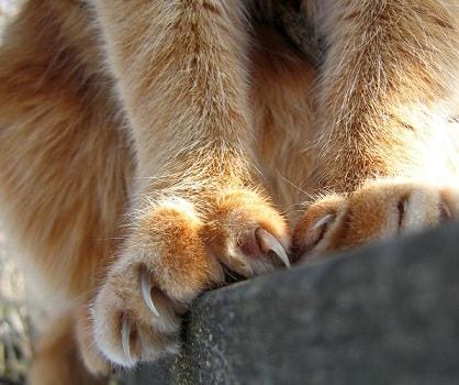 Если кошка дерет мебель (1)