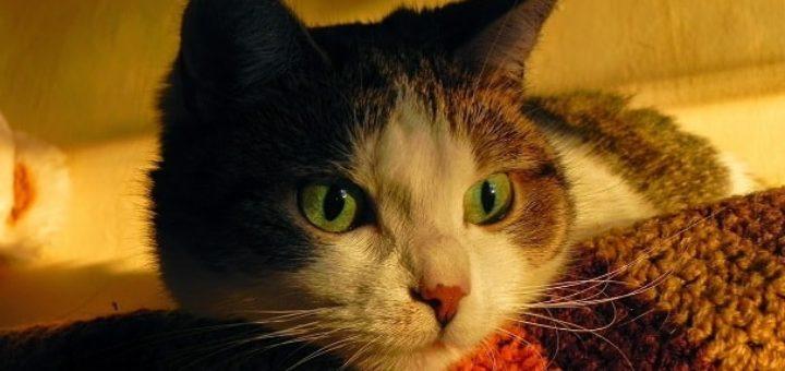 Если кошка дерет мебель (2)