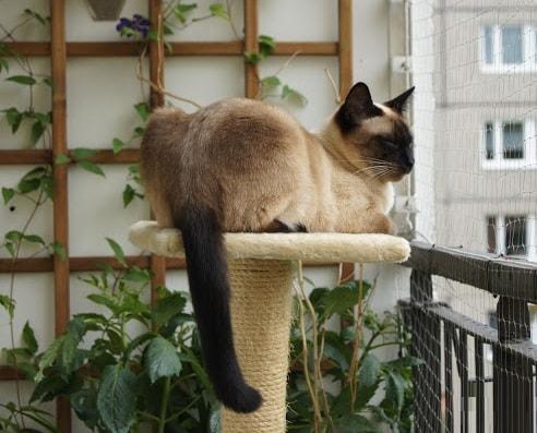Если кошка дерет мебель (3)