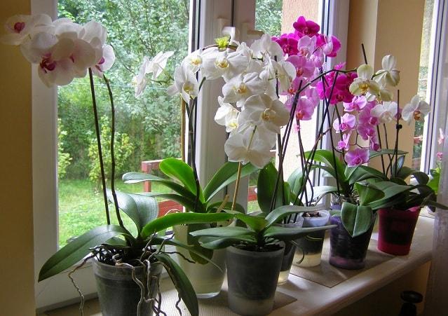 Выращивание орхидей в закрытой системе (1)