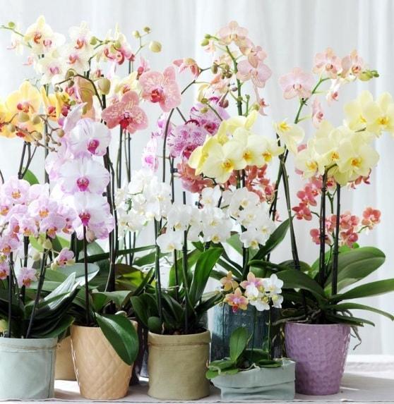 Выращивание орхидей в закрытой системе (2)