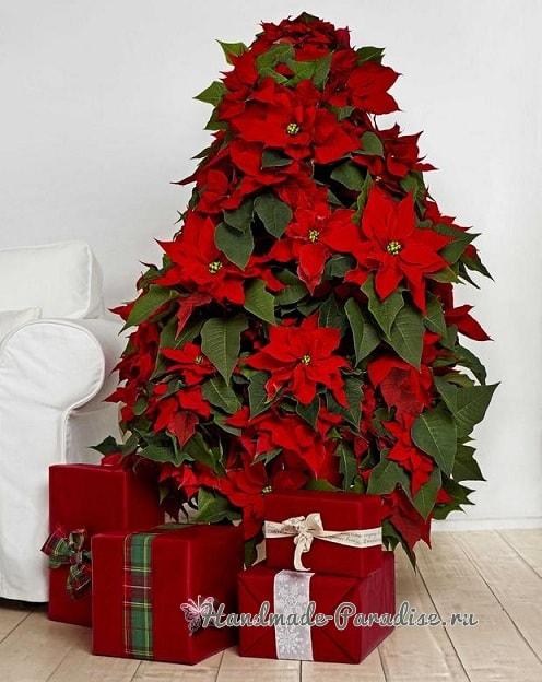 Новогодняя елка из цветов пуансеттии