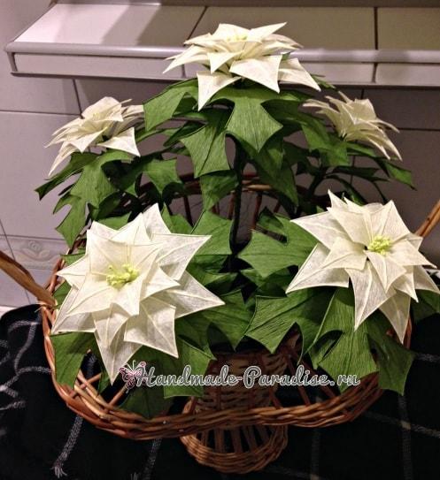 Рождественская звезда - Пуансеттия из бумаги (2)