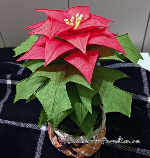 Рождественская звезда - Пуансеттия из бумаги (3)