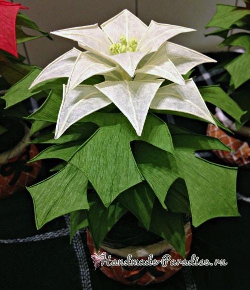 Рождественская звезда - Пуансеттия из бумаги (4)