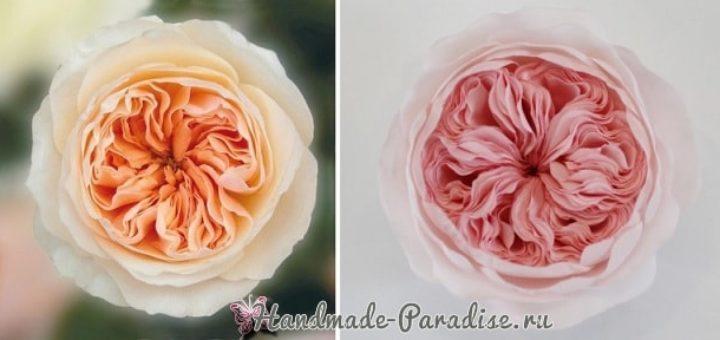 Английская роза Juliet Дэвида Остина из ткани (20)