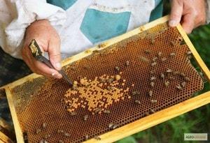 Как защитить пчел от болезней и вредителей (2)