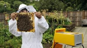 Как защитить пчел от болезней и вредителей (3)