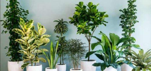 Неприхотливые комнатные цветы (2)