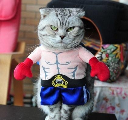 ТОП-З лучших подарка для кошки своими руками (1)