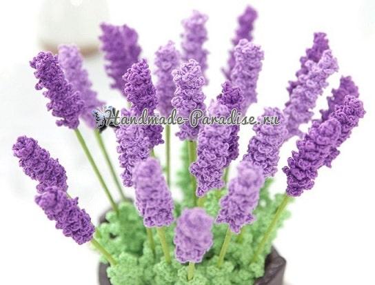 Лаванда - комнатные растения крючком (1)
