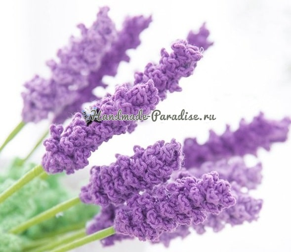 Лаванда - комнатные растения крючком (2)