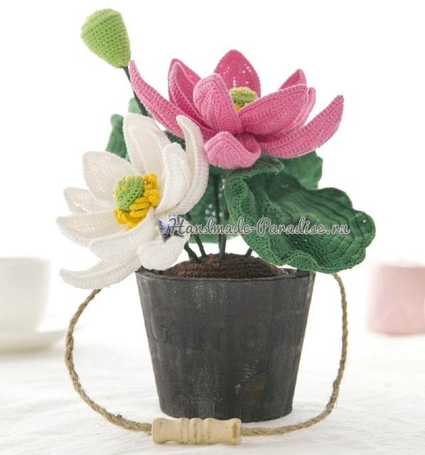 Лотосы - комнатные растения крючком (1)