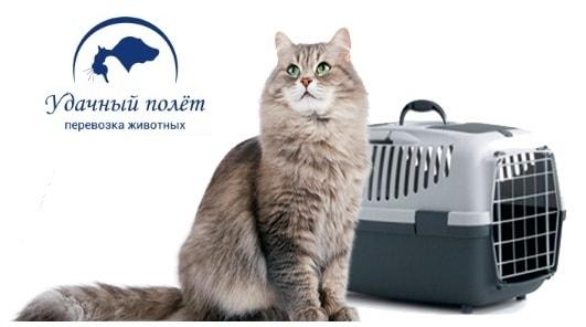 Особенности перевозки животных (1)