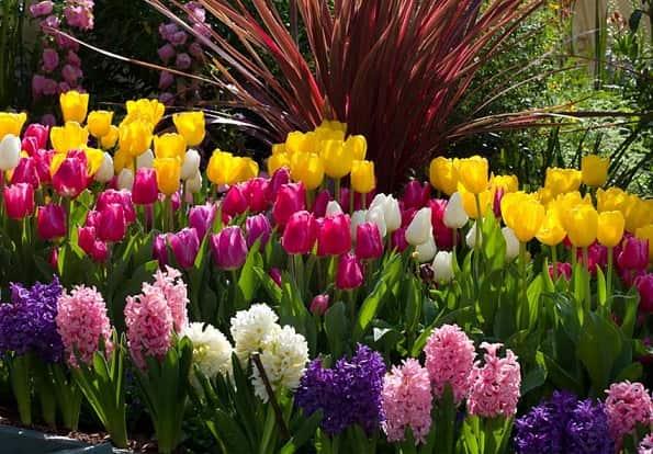 Разновидности многолетних растений (1)