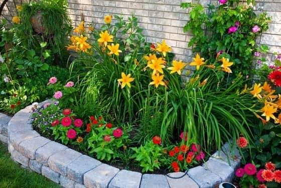 Разновидности многолетних растений (2)