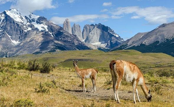 Что нужно знать перед поездкой по Патагонии