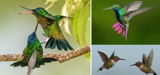 Колибри из бумаги. Цветные шаблоны (2)